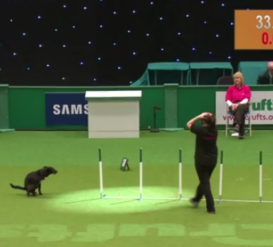 Crufts Agility Blooper