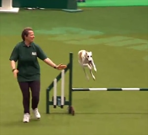 Rescue Dog Agility – Crufts 2012