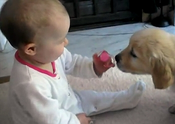 Baby And Puppy Meet For The First Time Life With Dogs