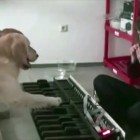 Dogs Match Music Notes Perfectly