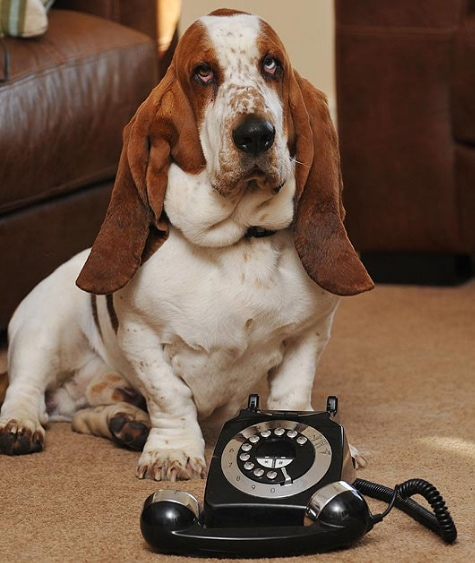 Choking Dog Dials Phone For Help, Saves Himself
