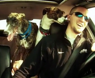 Adopt a Greyhound Month Promo Video
