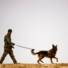 Lifesaving Dogs from Iraq Return to U.S. for Retirement
