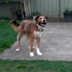 Blind Dog Still Loves to Play Fetch