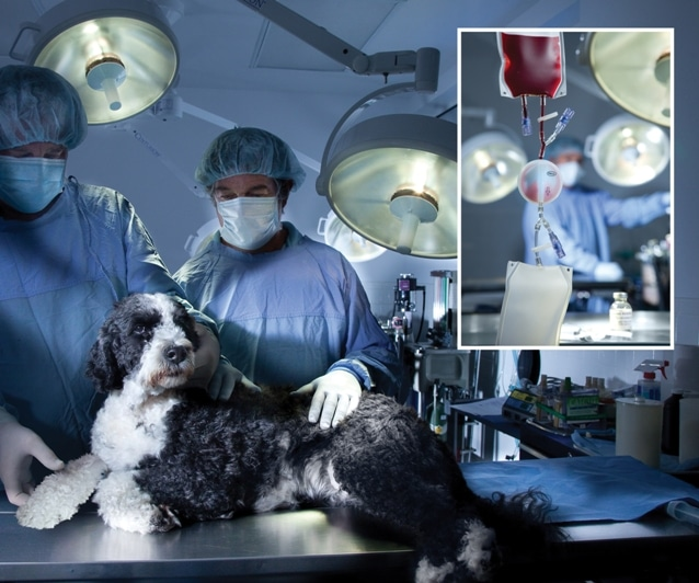 Clinical Trial Findings Show Platelet Therapy Can Provide Relief for Dogs with Osteoarthritis