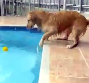 Dog Fetches Ball from an Uncooperative Pool