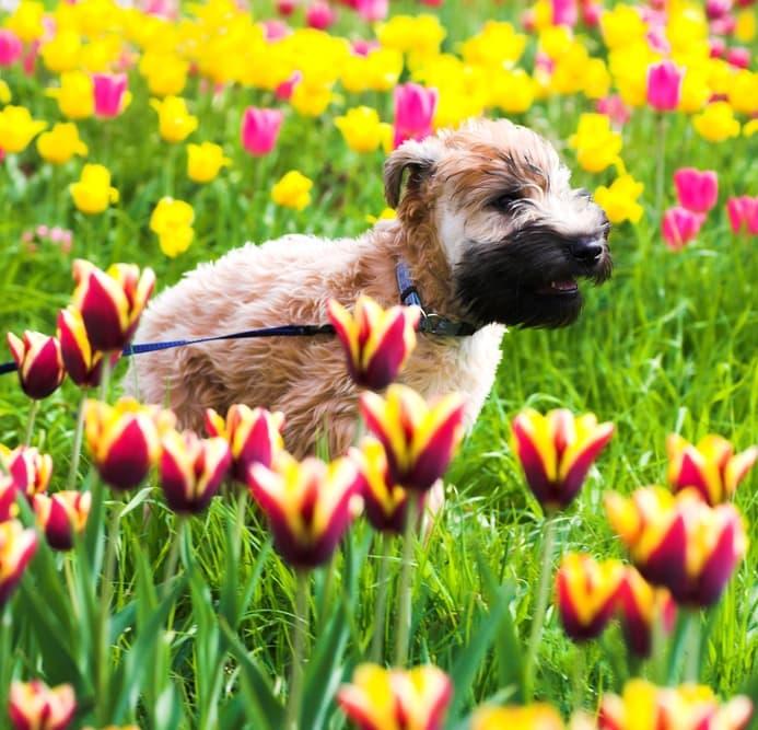 St. Patrick's Day Tribute to Irish Dog Breeds