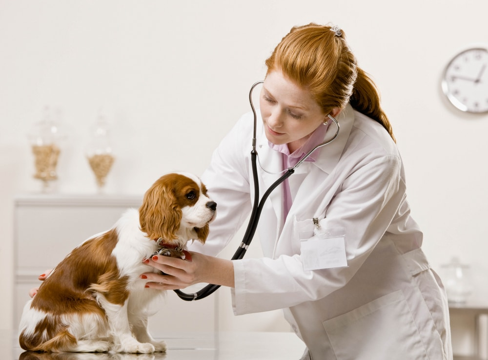 Top Ten Signs of Heart Disease in Dogs