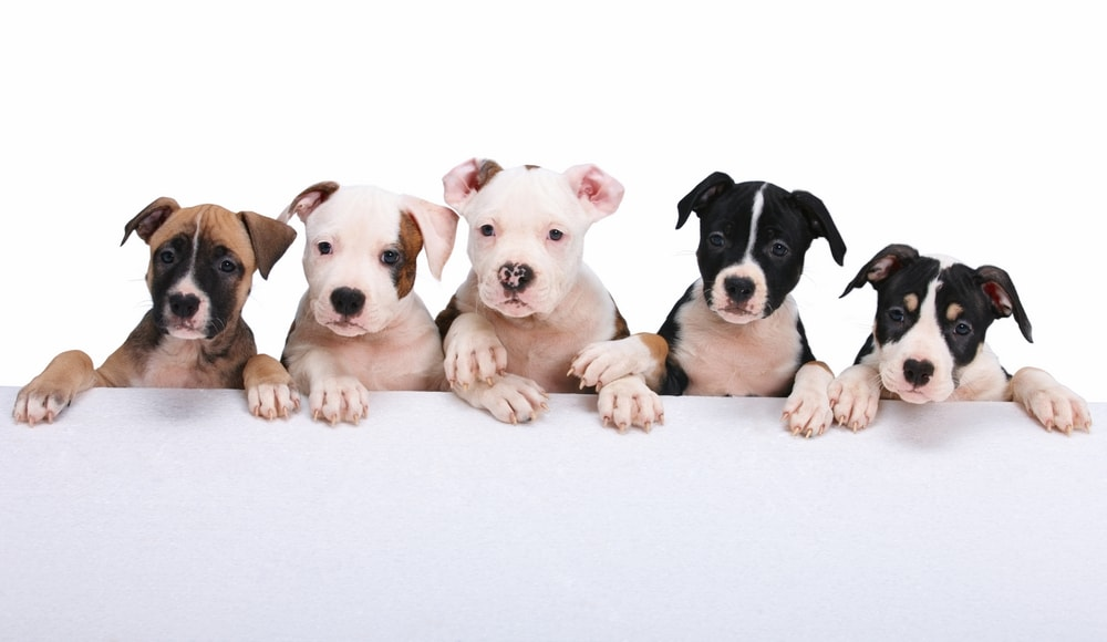 City Defies Maryland State Government, Refuses to Profile Dog Breeds