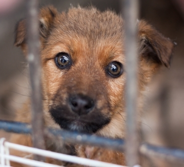44 Puppies Saved from GA Kill Shelter; 40 Need Homes