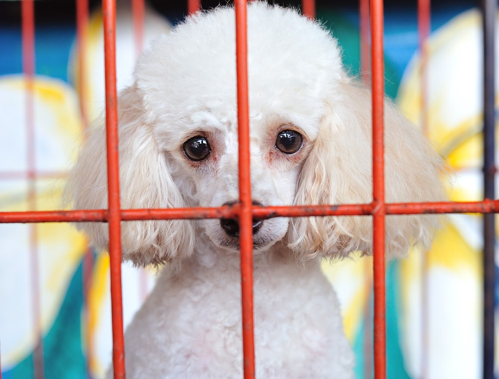 Laguna Proposal Would Ban Puppy Mills