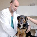 The 10 Most Common Pet Ailments