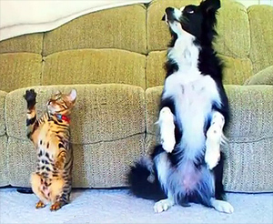 Cat vs Dog: A Trick Contest