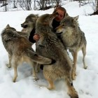 Tail-wagging Reunion for Woman and Her Wolf Friends