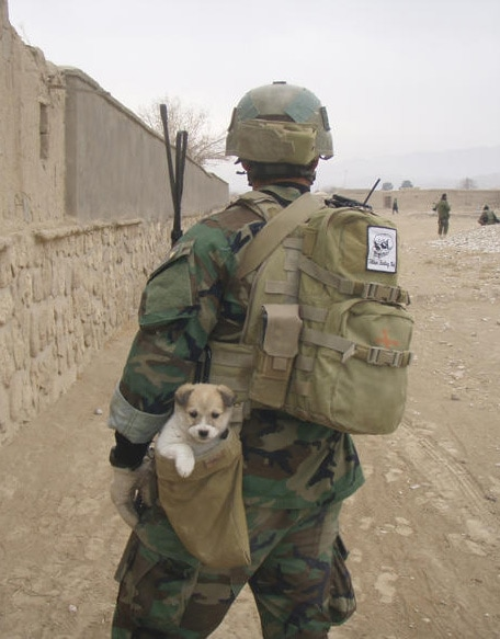 Nowzad Needs You to Help Save a Shelter