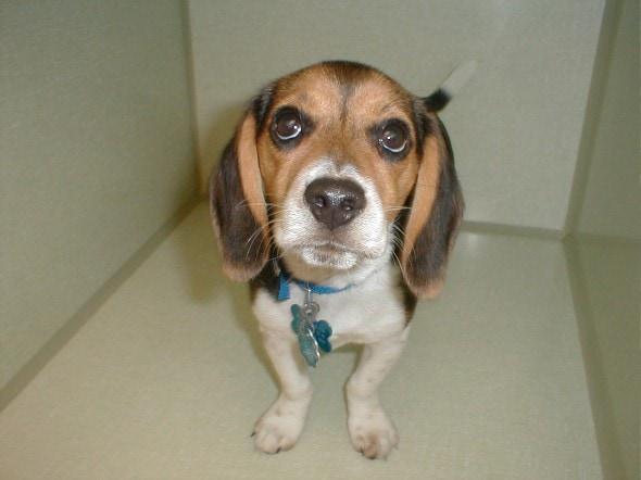 Managing Dry Eye In Dogs