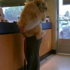 Making Veterinary Visits Less Scary