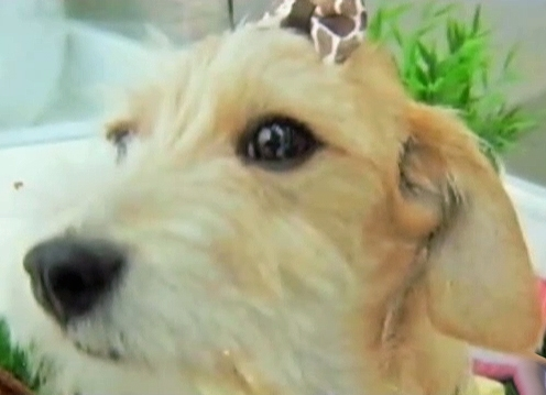 Colorado Woman Awarded $65K After Dog is Left to Die Under Table