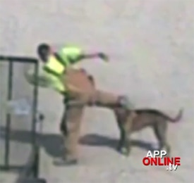 Abuser Caught on Camera, Dog Fights Back