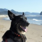 Cannon Beach – Voted Best City For Pet Travelers