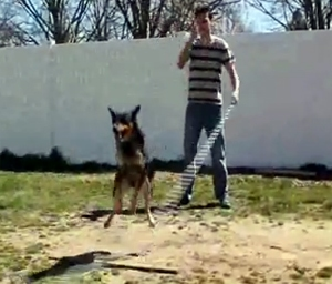 Double Dutch Dog Will Blow Your Mind