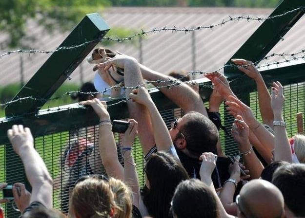 Activists Storm Research Breeding Facility, Liberate 30 Beagles