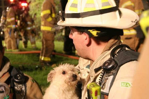 NJ Firemen Rescue 15 Puppies from Burning Home
