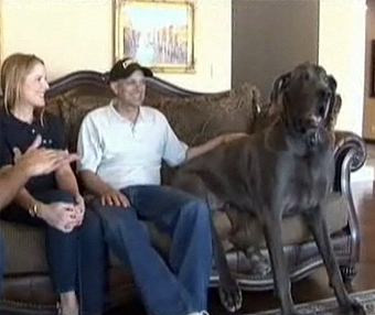 From Runt to World's Largest Dog