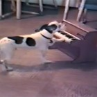 Puppy Plays a Masterpiece