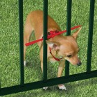 The Escape Preventing Dog Harness