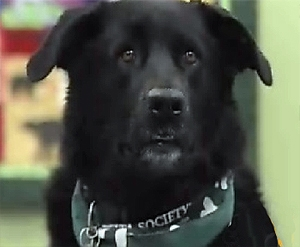 Therapy Dog Comforts Young Sexual Assault Victims