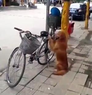 Dog Guards Owner's Bike