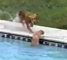 Lifeguard Dog Rescues Pup