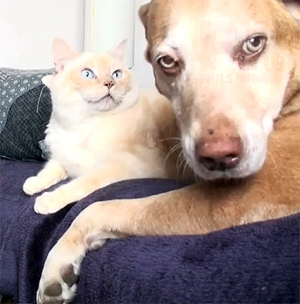 Please Don't Put Your Paw Here