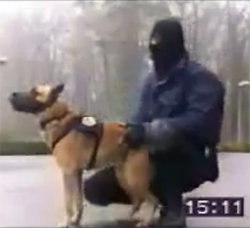 Police Dog Training – Strong Dogs