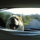 How to Prevent Travel Anxiety and Carsickness in Dogs