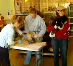 Shelter Overwhelmed by Seizure of 353 Dogs from Breeder
