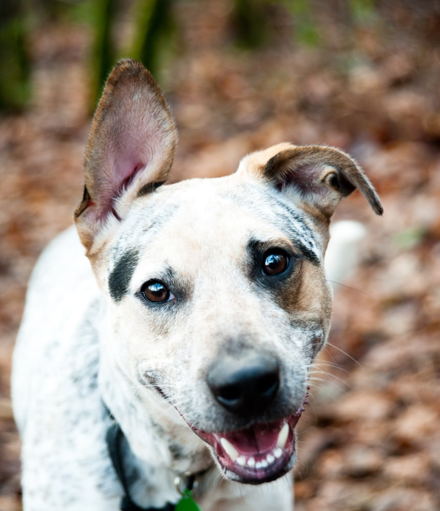 NY Senate Passes Pet Protection Bill