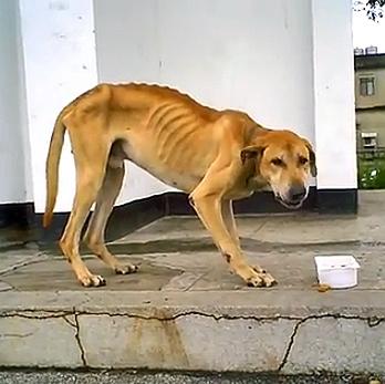Homeless Marmaduke