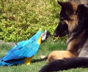 Parrot and Dog Share a Stick
