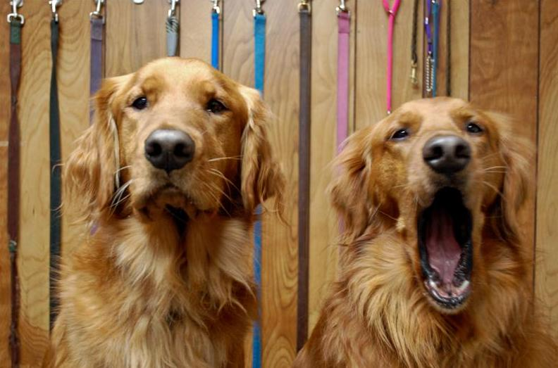 Like Humans, Dogs Engage in Riskier Behaviors When Their Self-Control Is Depleted
