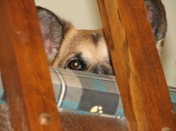 Fearful Dog Talk