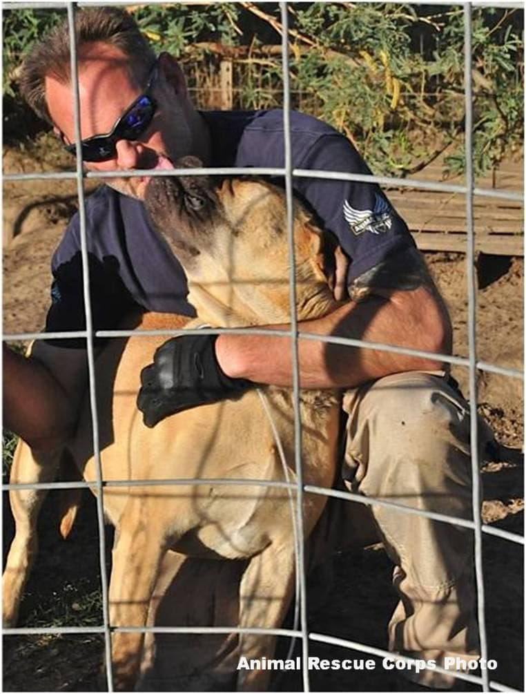 Animal Rescue Corps Saves 16 Negelcted Mastiffs from AZ Property
