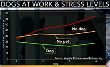 Researchers: Dogs Lower Stress in Workplace