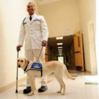 Service Dog Donated to Wounded War Veteran