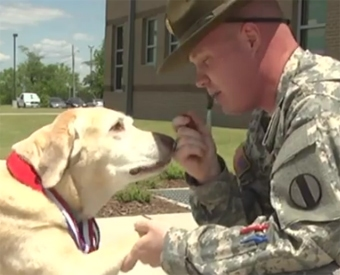 Retired Military K9 Nominated for Hero Award