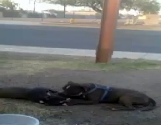 Faithful Dog Refuses to Leave Side of Fallen Companion