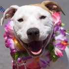 Pit Bull Ban Repealed