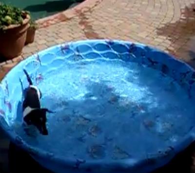 Wiener Dog Whirlpool