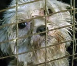 USDA Proposes Regulation of Internet Pet Sales